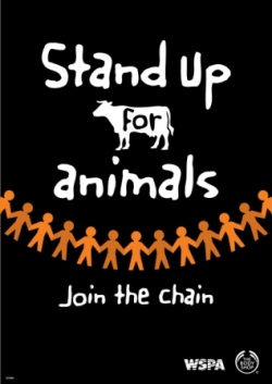 cruelty towards animals in the modern world After all these acts of cruelty such as locking animals in complete darkness, sending them crazy in high schools around the world hundreds and thousands of animals are killed and dissected in so we can know how to inflict cruelty towards animals in most of these cases children are forced to do so.